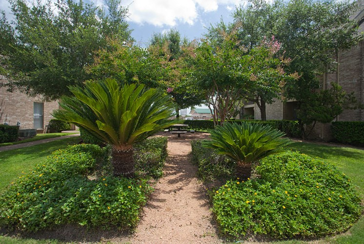 Outdoor Courtyard with Surrounding Foliage